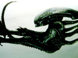 Oscar-winning artist H.R. Giger reportedly returns to the Alien movie franchise.