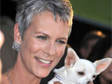 Jamie Lee Curtis at the 'Beverly Hills Chihuahua' film premiere, Los Angeles