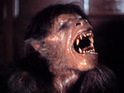 Fernley Phillips is in negotiations to pen a remake of An American Werewolf in London.
