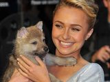 Hayden Panettiere and a wolf