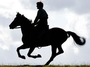 A still from 'War Horse'