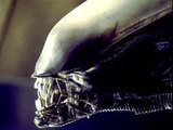 Xenomorph from 'Alien'