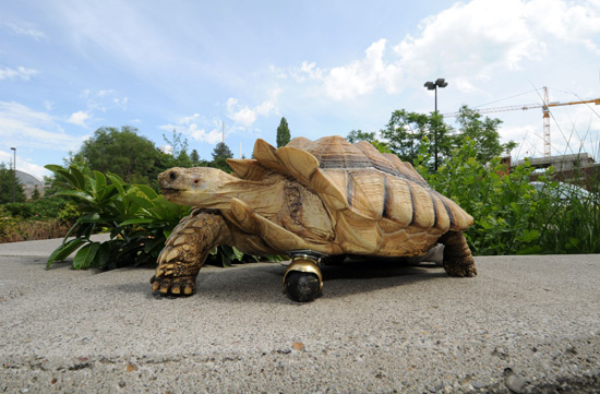 Tortoise with a wheel instead of a leg