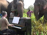 Elephants listening to Beethoven