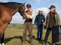 "Steven Spielberg explains War Horse ""could have only been shot in England""."