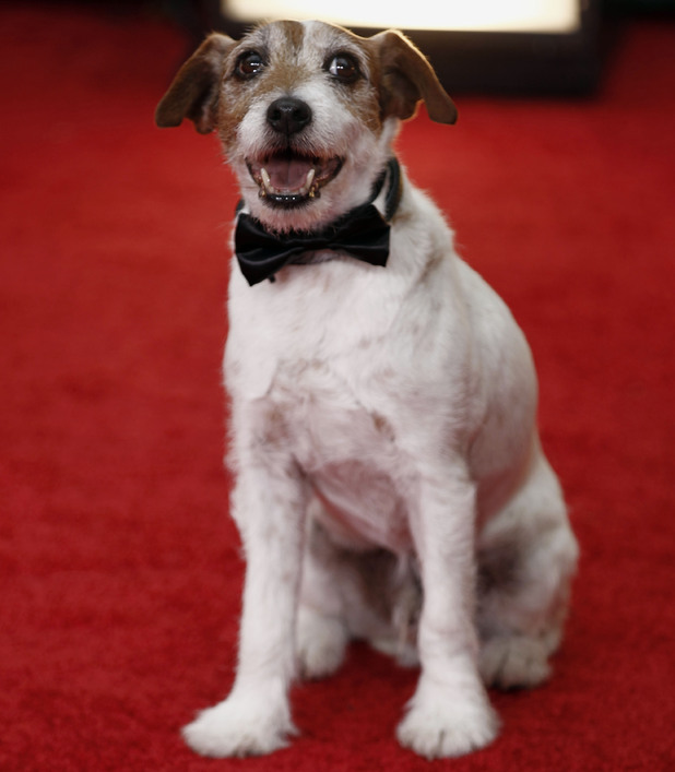 'The Artist' star Uggie