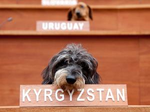 'Dachshund UN', Fierce Festival - 'Delegate' for Kyrgyzstan