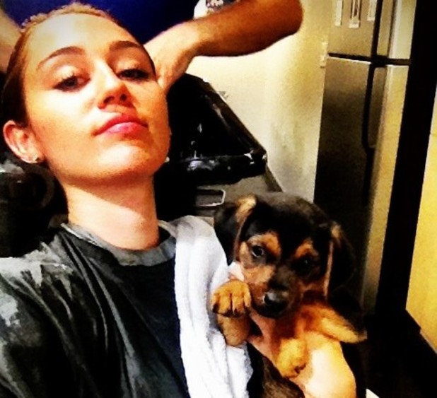 Miley Cyrus rescues puppy left at store