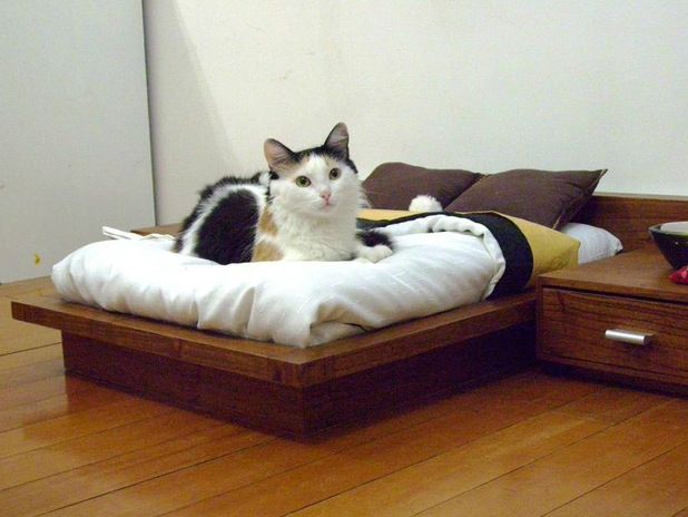 designer beds available for pets pictures fun news digital spy. Black Bedroom Furniture Sets. Home Design Ideas