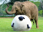 Watch Donna the Elephant playing football at Whipsnade.