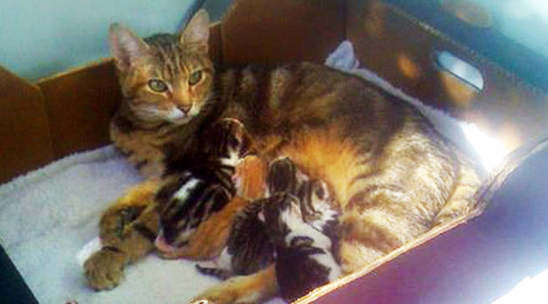 Cat gives birth to kittens inside tumble dryer