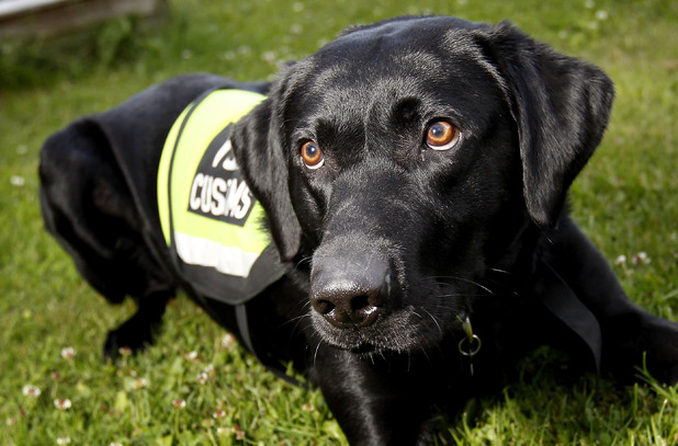 Sniff the Sniffer Dog