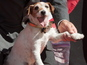 Uggie honoured in paw-print ceremony