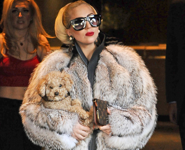 Lady Gaga carries a puppy as she leaves her hotel in Sofia where she is for the first gig of her European tour