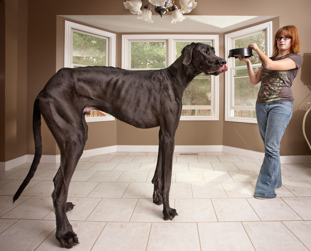 Tallest ever dog