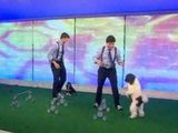 America's Got Talent 2012 winners 'The Olate Dogs' performing on the Today Show
