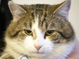 Cat - stock image for story on cat that ran away after couple paid £6,000 to bring it back from Egypt.
