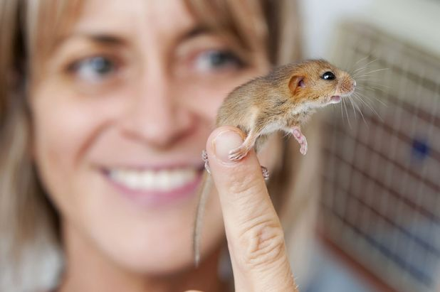 Folly Wildlife centre supervisor Antonia Blacker with Douglas the Dormouse