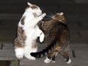 David Cameron's cat Larry seen fighting with George Osbourne's pet Freya.