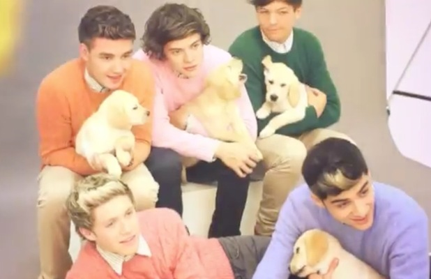 One Direction cuddle puppies, wear jumpers for Wonderland magazine shoot.
