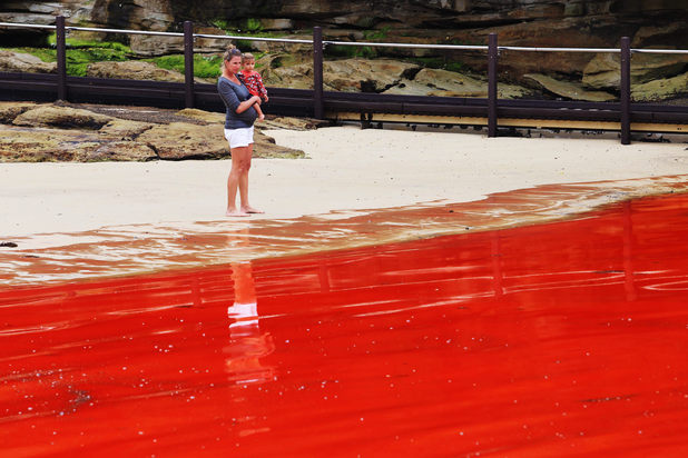 Red algae closes beaches in Sydney