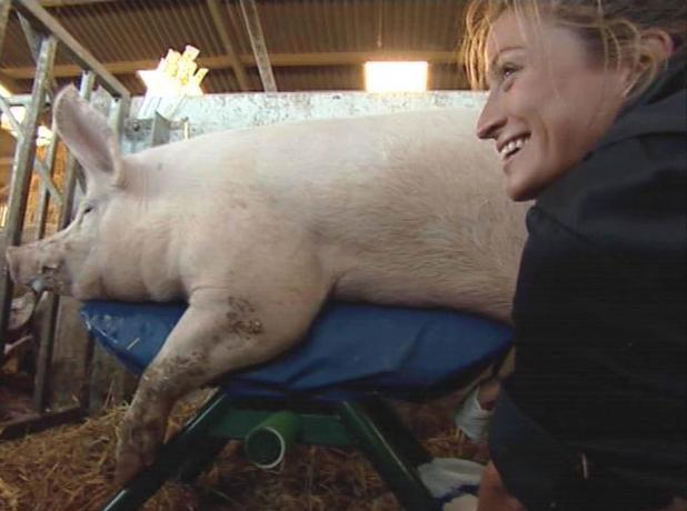 The Farm: Rebecca Loos masturbates a pig