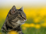 cat looking sideways in field