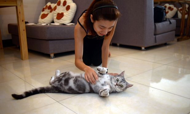 Cat cafe in Chongqing, China - 05 Jul 2012 - customer stroking a cat