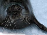 Seal (generic)