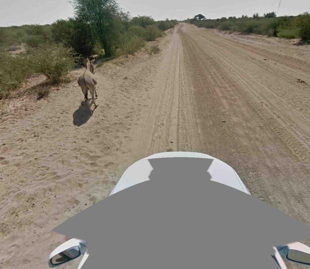 Google Maps/donkey