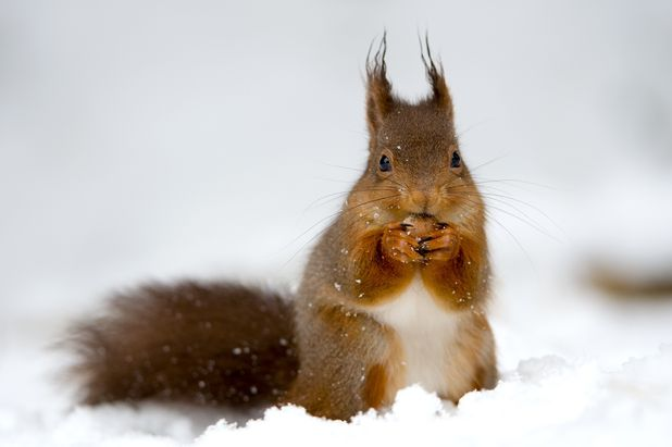 Cute animals in snow