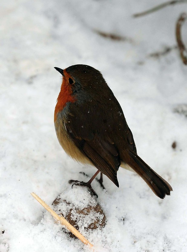 Robin at Twycross Zoo