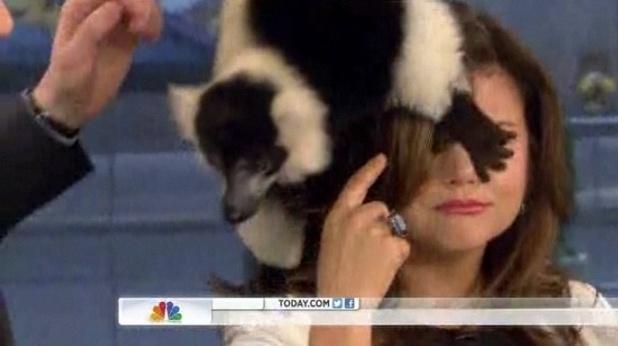 A lemur clambers over Tiffani Thiessen on Today