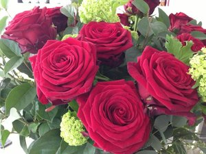 Christine Bleakley roses