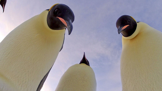 &#39;Penguin: Spy in the Huddle&#39;: Emperor penguins