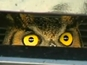 An owl gets stuck inside a radiator in Miami after being hit by the car.