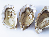 Fresh oysters, a pearl in one of them