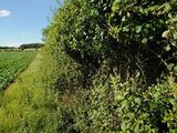 Hedgerow in Rutland, England