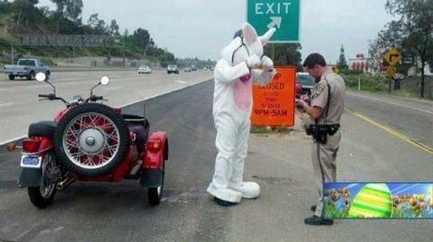 Easter Bunny pulled over by police