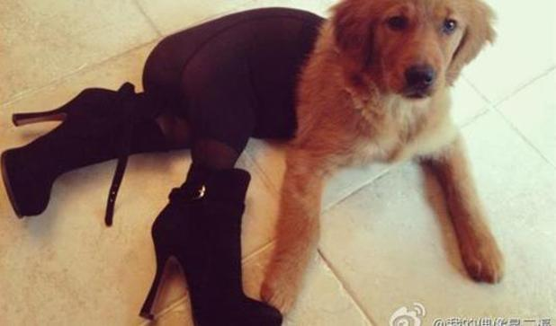 Dogs dressed in suspenders and stockings on Chinese social media site