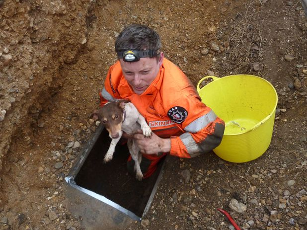 Dog rescued after five days in pipe
