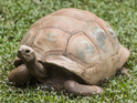 Having given up hope, an owner finds his tortoise ten months later.