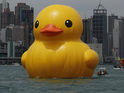 Hundreds of tourists flock to see the six-storey-high duck on Victoria Harbour.