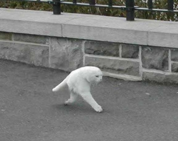 Google Street View half a cat