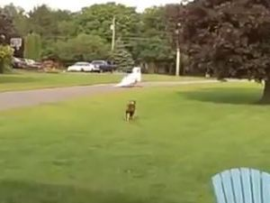 Dog chases after woman's wedding dress