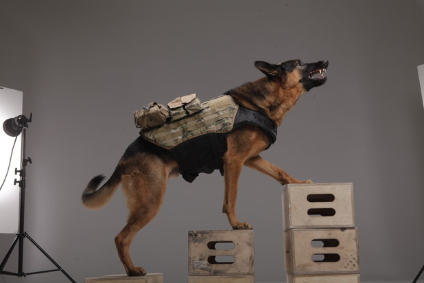 gaming call of duty ghosts 9 Call of Duty: Ghosts will have a playable German Shepherd.