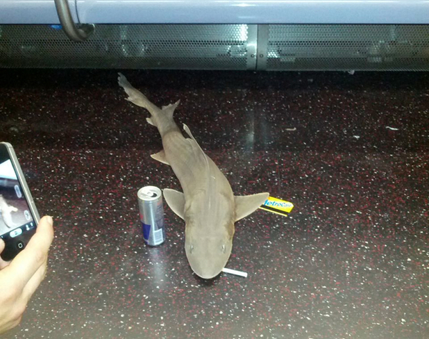 Subway shark with cigarette