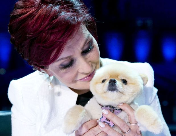 Sharon Osbourne and her pet dog Bella at 'The X Factor' Boom Camp auditions