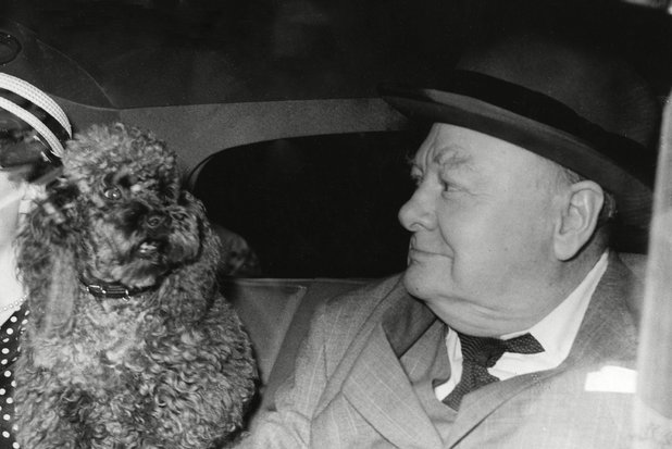 Winston Churchill, Rufus the poodle