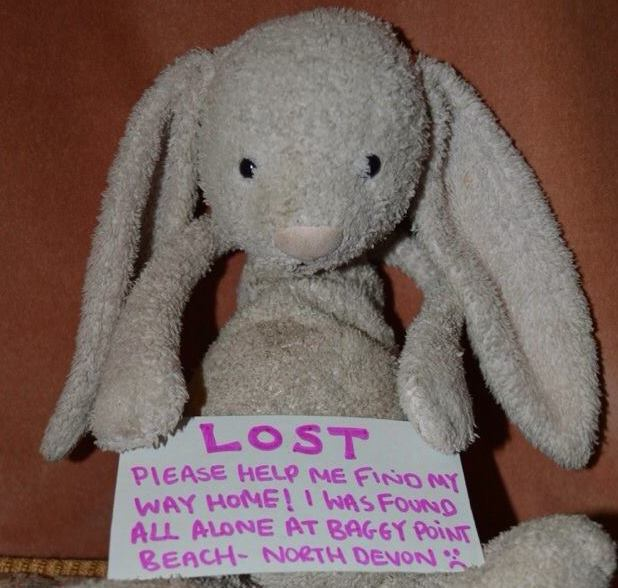 Lost Bunny on Facebook